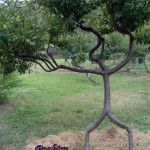 african-person-tree-01