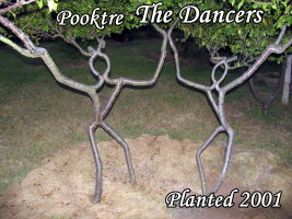 the dancing tree people